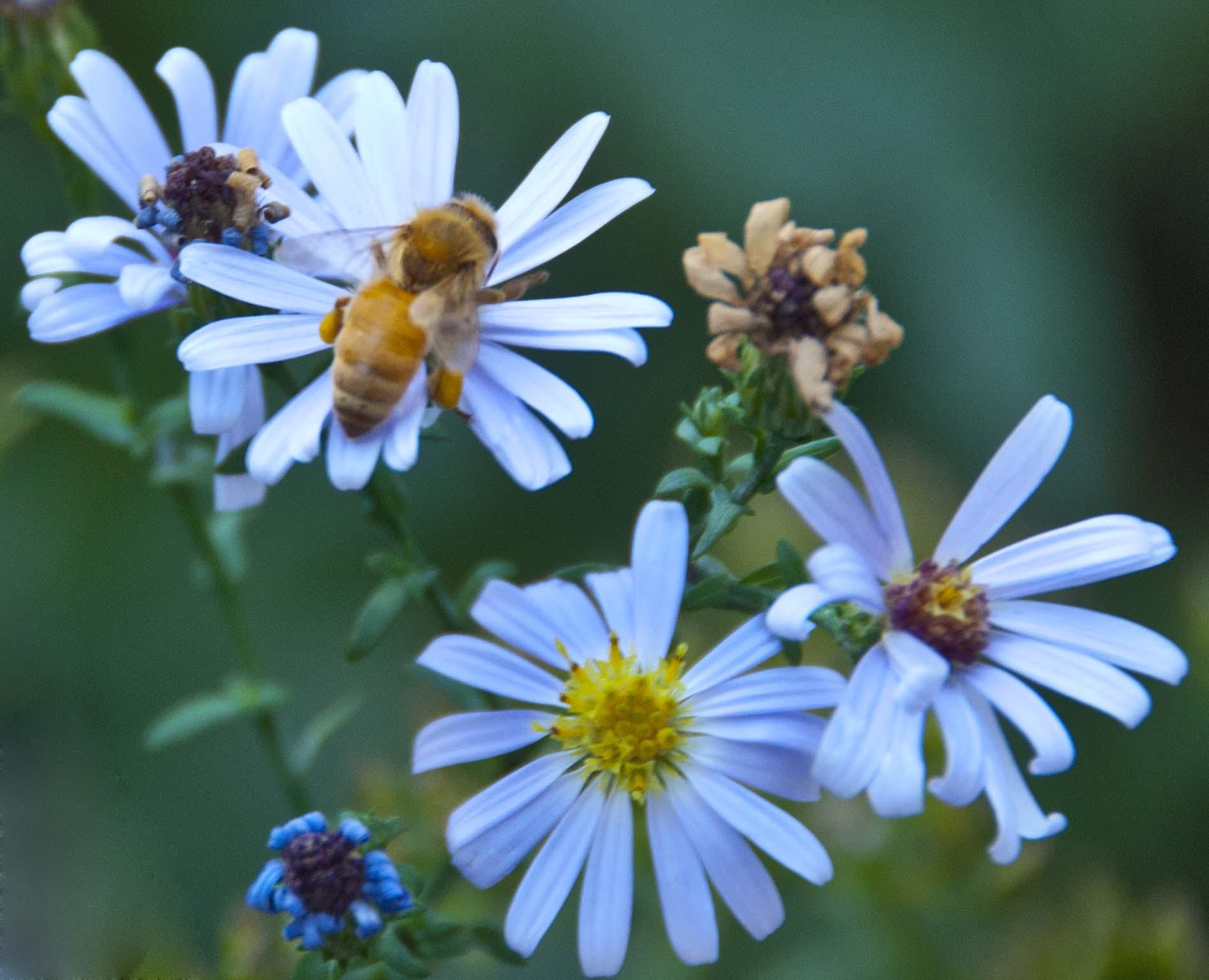 Butterfly Facts For Kids   Butterfly Habitat & Diet