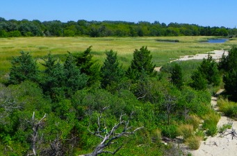View over the salt marsh