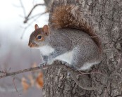 Squirrel, Central Park, NYC
