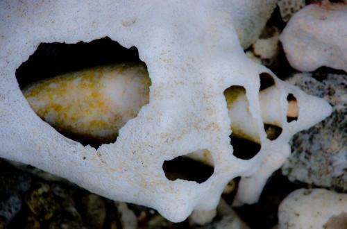 Broken shell 3