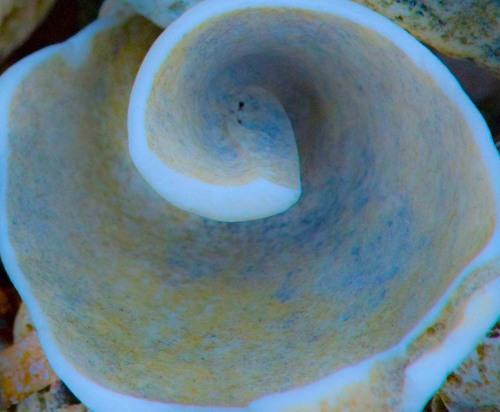 Broken shell 4