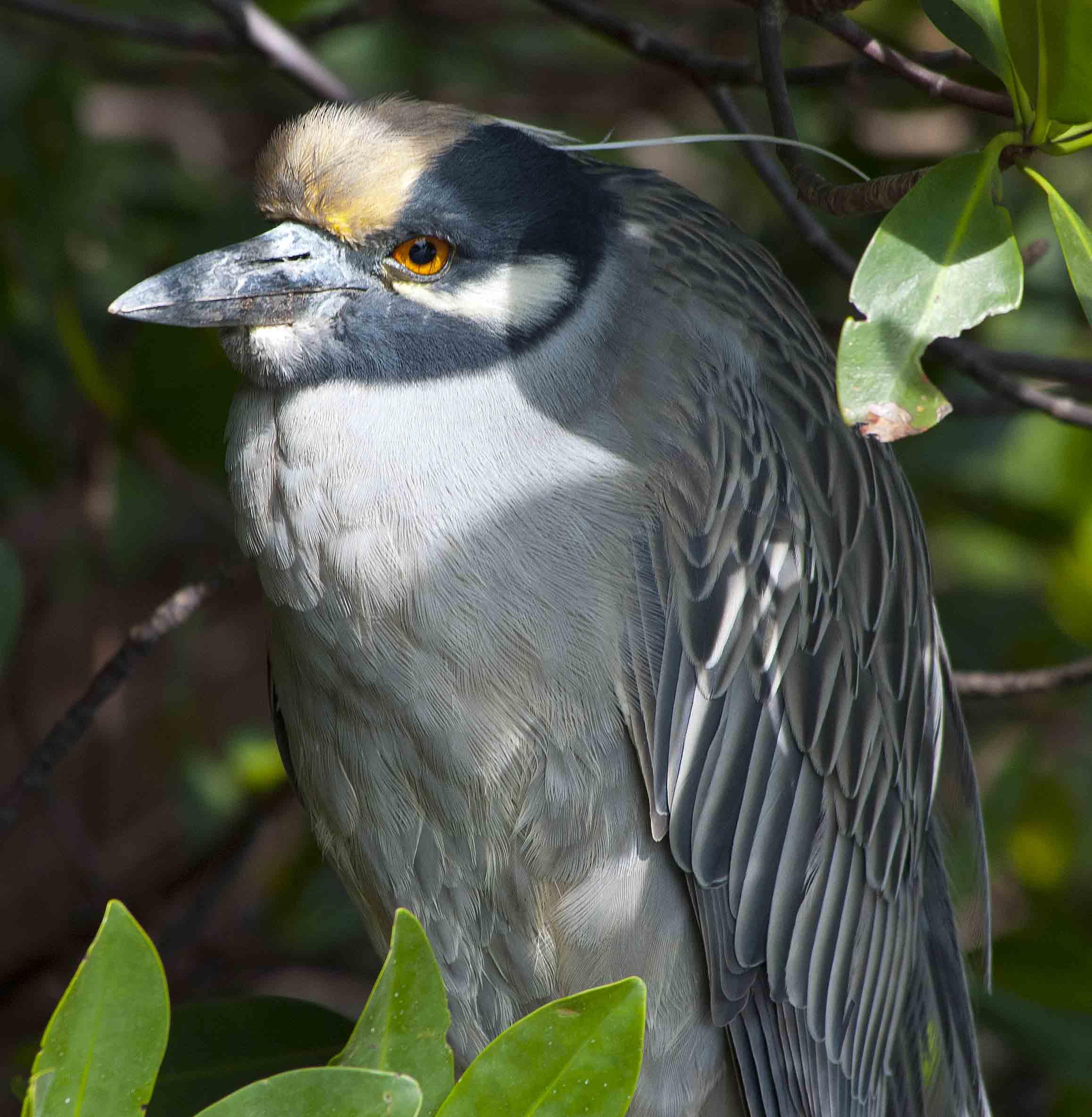 Birds: Close Encounters With Florida Birds