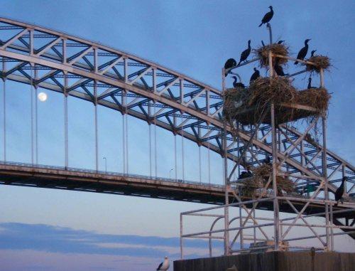 Bayonne Bridge, Kill van Kull, NY/NJ