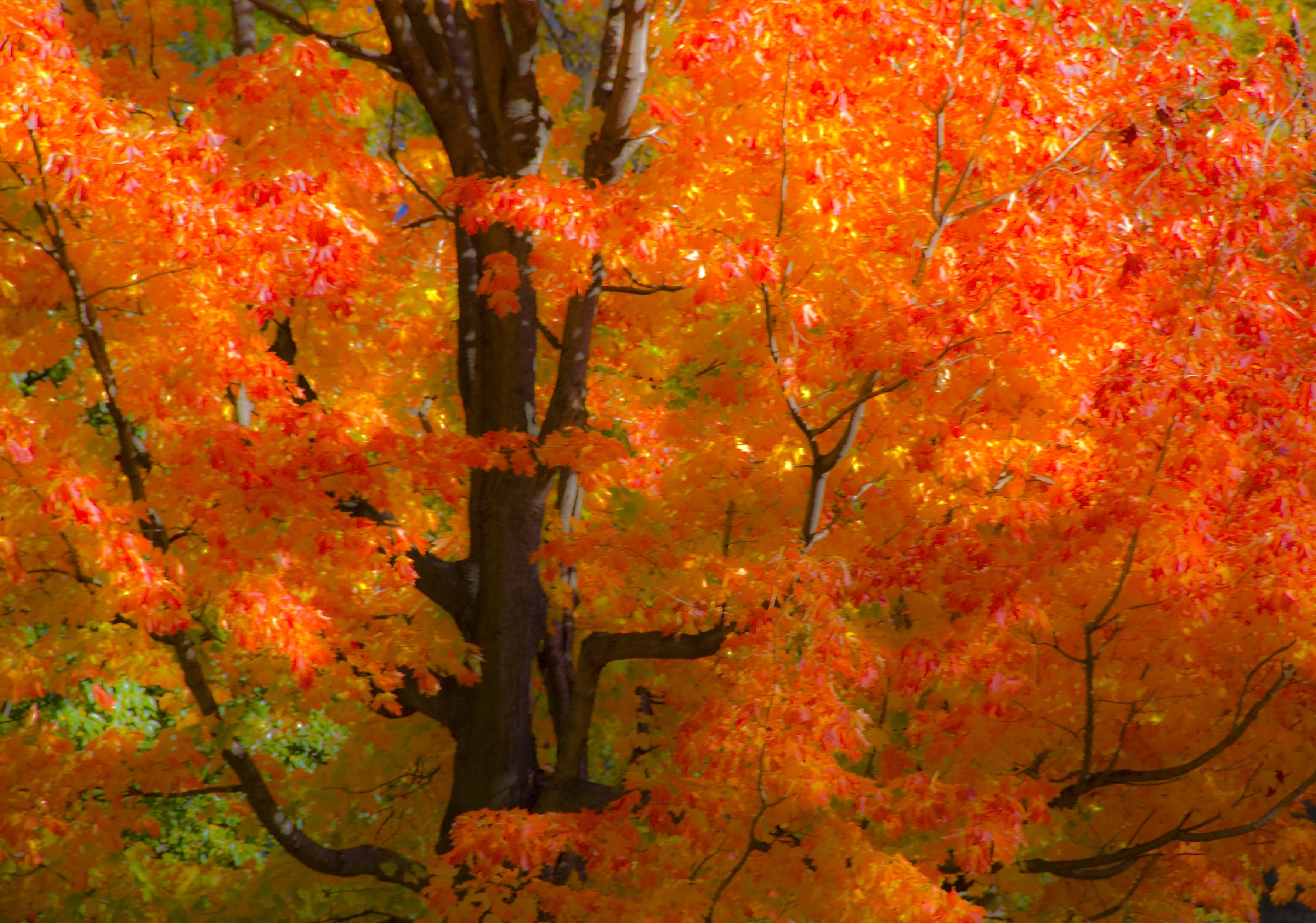 Image Result For Fall Tree Leaves