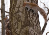 Two squirrels...