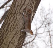 One squirrel...