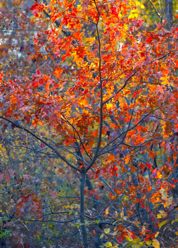 November: Fall colors in NYC's Central Park