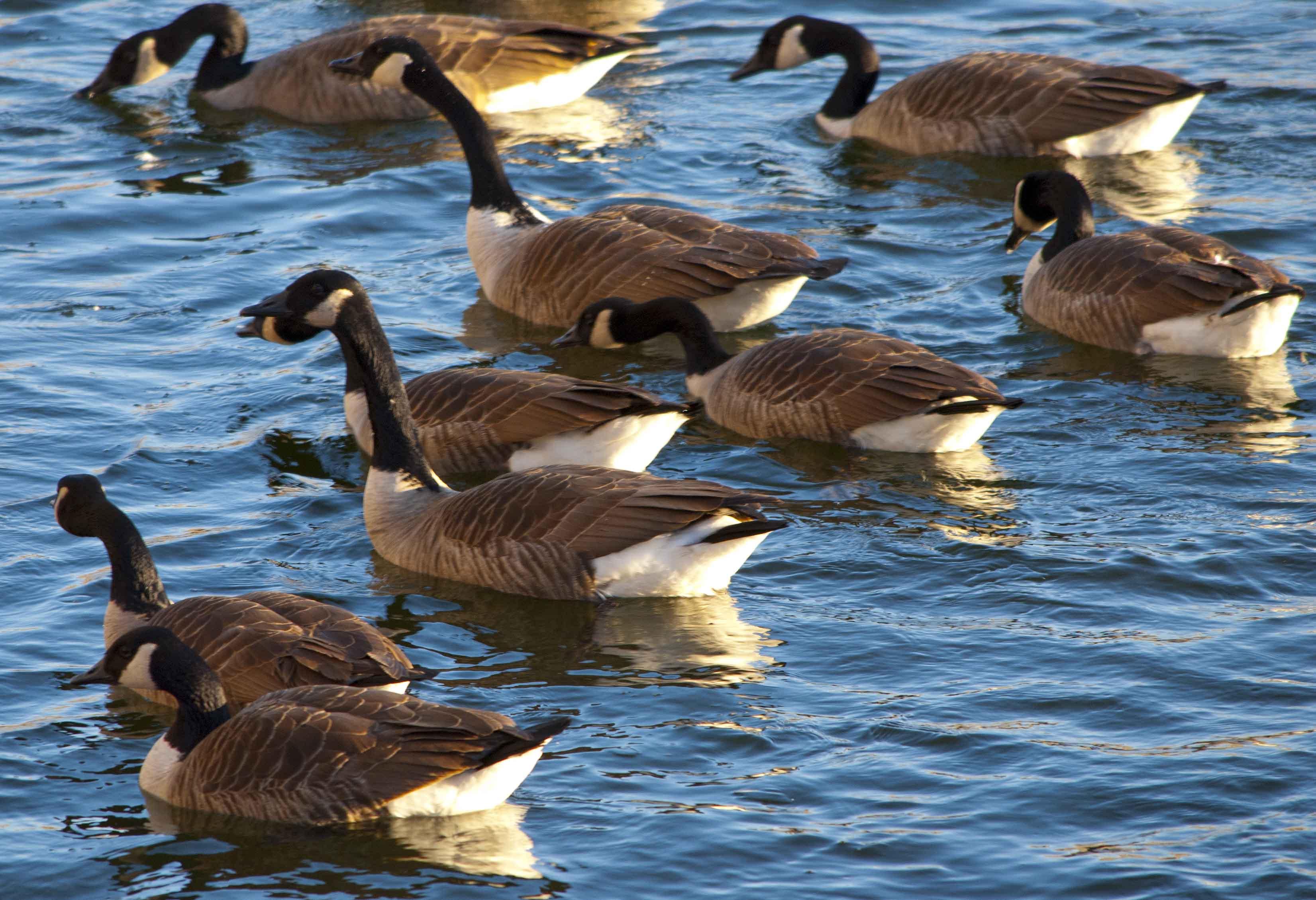 Canada Goose' official quicken