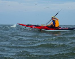 With terns wheeling above, we paddle back