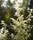 Sunlit with spiderwebs