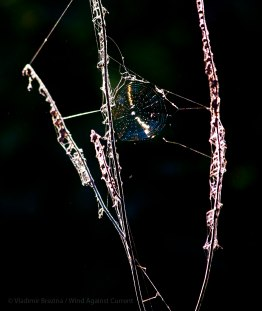 Iridescent spiderweb