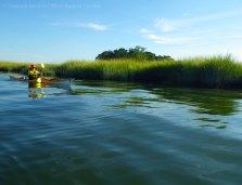 Into the salt marsh