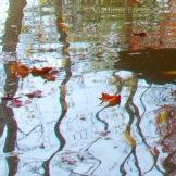 Fall Water 5