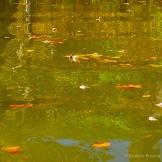 Fall Water 9