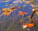 Fall Water 3