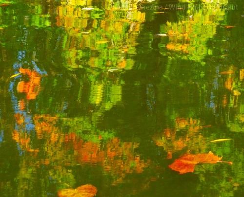 Fall Water 2