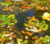 Fall Water 16