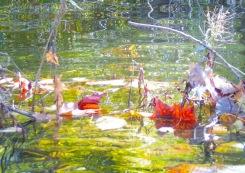 Fall Water 1