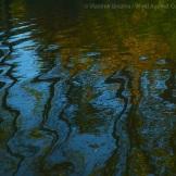 Fall Water 17