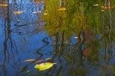 Fall Water 19