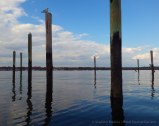 Pilings of a marina