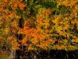 Fall reflections 8