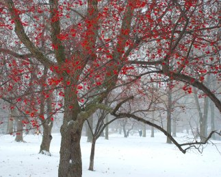 A splash of red against the white