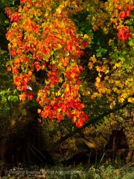Fall reflections 10
