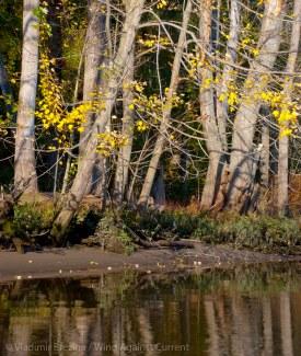 Fall reflections 11