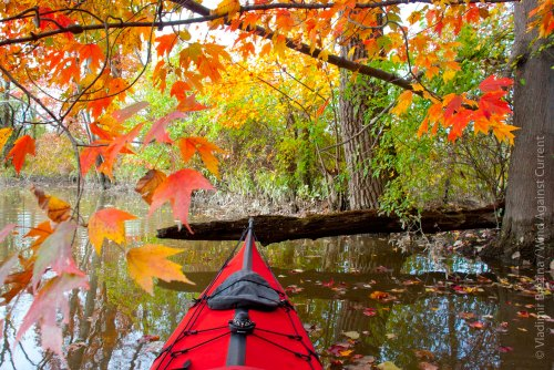 Fall colors by kayak