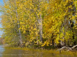 Yellow with autumn