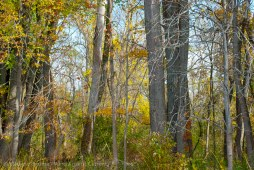 Along a wooded bank 2