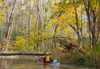 Into a wooded creek