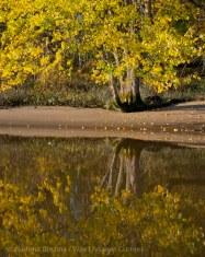 Fall reflections 1