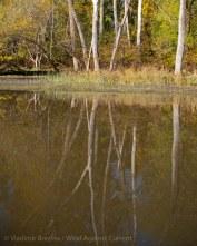 Fall reflections 5