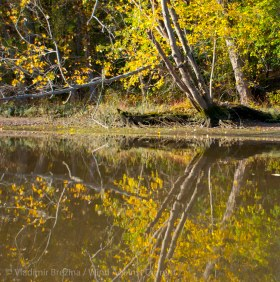 Fall reflections 6