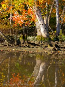 Fall reflections 7