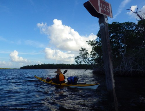 Through the mangrove rivers and bays