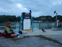 Expectant crows watch as we repack our boats at Flamingo
