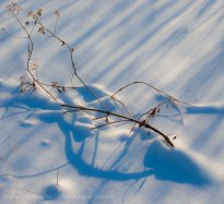 Snow shadows 5