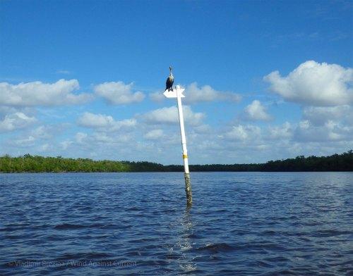 Into the Everglades!