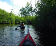 We paddle through Alligator Creek