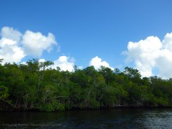 ... above the mangroves
