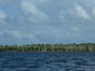 Dead trees line the shoreline: hurricane damage