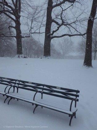 Park benches under snow