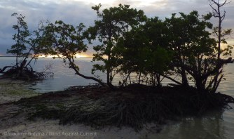 Last outpost of the mangroves