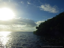We leave the island