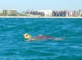A friendly sea creature
