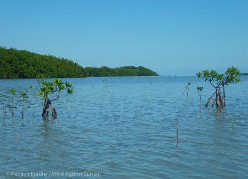 New mangroves