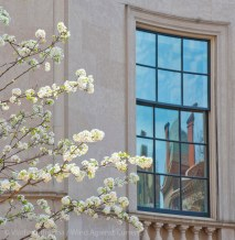 Spring on Fifth Avenue 7